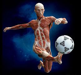 Fabuleux corps humain